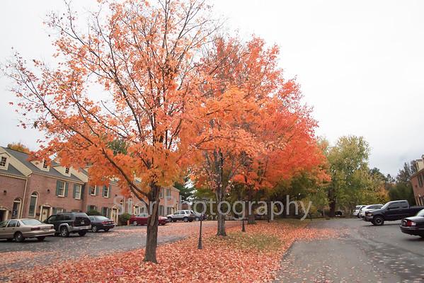 Fall Leaves 10-29-14