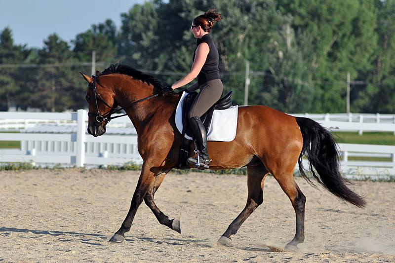 Horses July 2011 397a.jpg