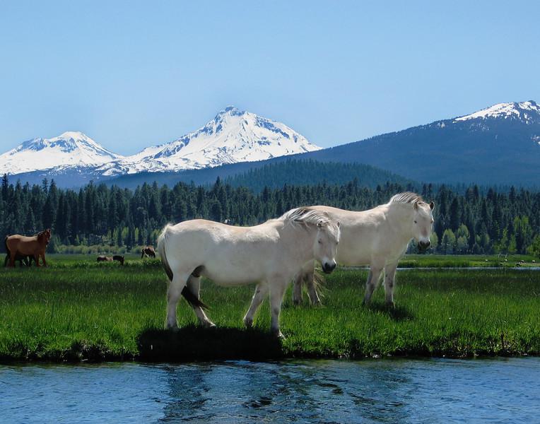 Horse Dreams_4703 copy.jpg