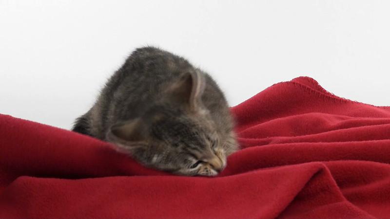 kitten_103_01.mov