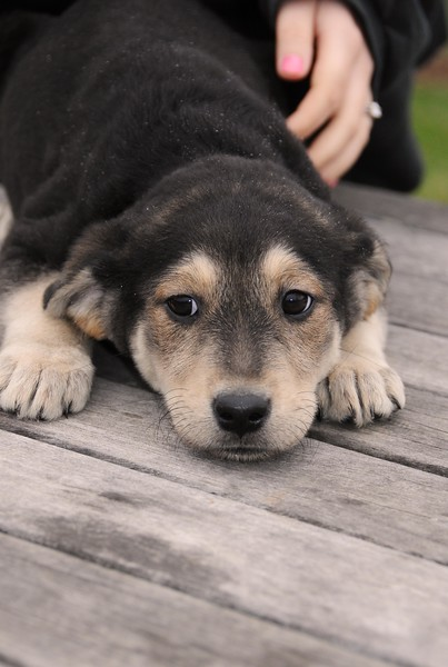hound.jpg