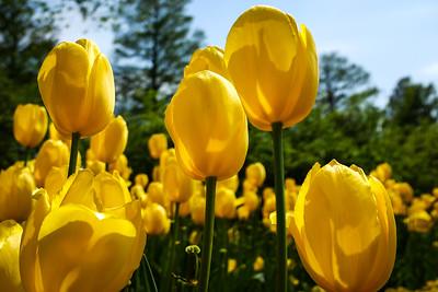 Longwood Gardens - May_7_2015