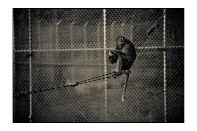 Vancouver Zoo 16.jpg