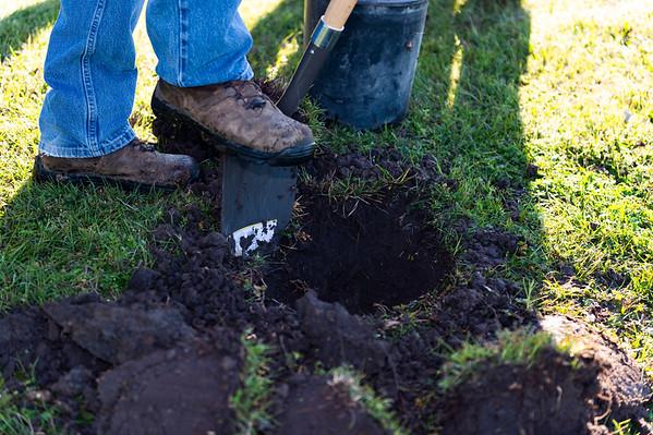 Tree Planting - Crenshaw and Preston