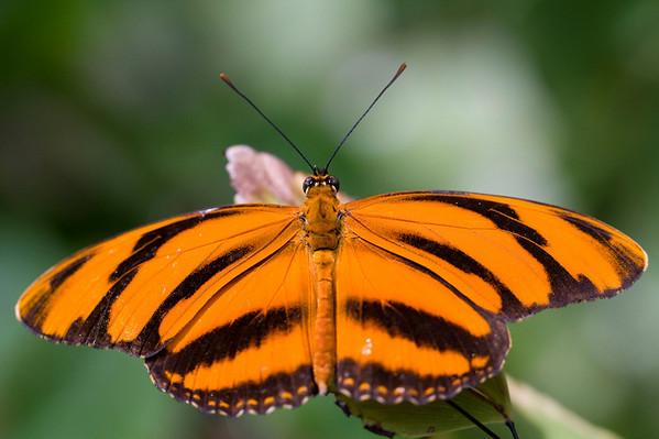 Butterflies_Camera Club Shoot