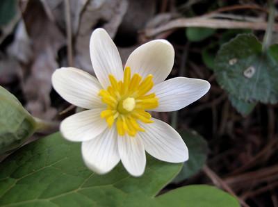 Wildflowers of No. America Past Years