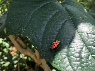 2019 - Indonesia - Bali - Kemenuh Butterfly Park