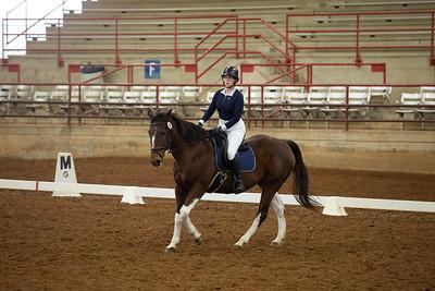 Horse 290