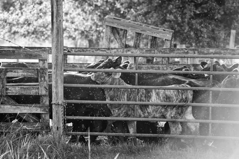 Breely Barthle Ranch B&W 3 (22 of 46).jpg
