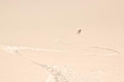 White Pass, WA:: February 2012