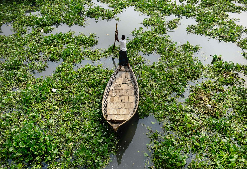 . A Bangladeshi boatman makes his way through hyacinth plants in the Buriganga River during a strike called by the Jamaat-e-Islami religious political party to protest against the execution of leader Motiur Rahman Nizami in Dhaka on May 12, 2016. Bangladesh May 10 deployed thousands of police in the capital to prevent violence, after the main Islamist party called a nationwide strike to protest against its leader\'s execution for warcrimes. Jamaat-e-Islami party president Motiur Rahman Nizami was hanged late May 10 following his conviction for the massacre of intellectuals during Bangladesh\'s 1971 war of independence from Pakistan. / AFP PHOTO / STRSTR/AFP/Getty Images