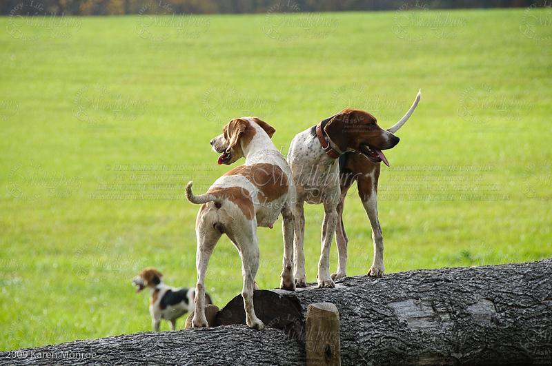 Piedmont Hunt, 2010