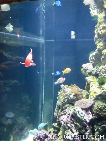 SF Woodpecker Aquarium of the Bay Outing