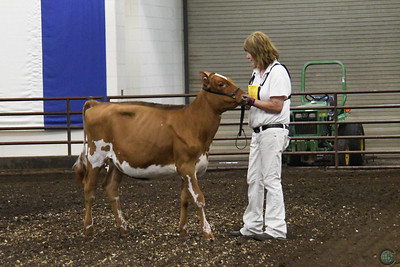 Illinois State Fair Ayrshire Show 2018