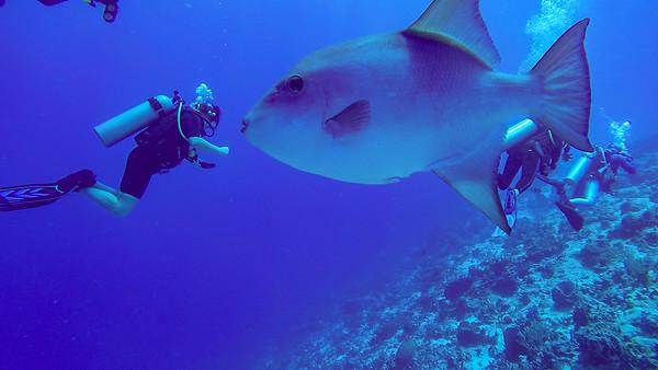 2019 07 Cozumel Diving Videos