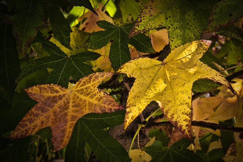 October 25 - Fall Leaves.jpg
