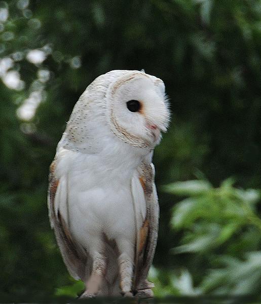 Owl eyes .jpg