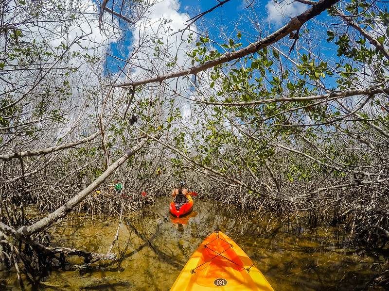 Florida Keys Kayaking - Big Pine Key - Lina Stock