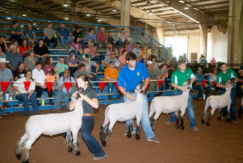 ok_state_fair_20190914_lambs-22.jpg