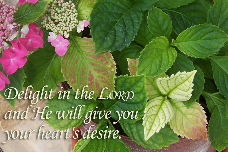 19_Psalm37-4_JC_2017-4-29.jpg