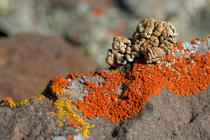 Bozeman Lichens-20.jpg
