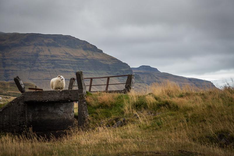 9699-Iceland-Paul-Hamill.jpg
