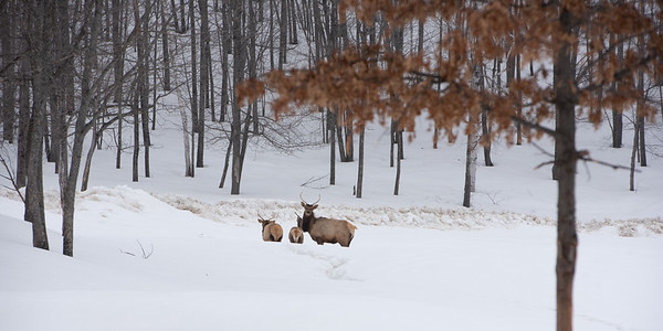 Laci's images of Parc Omega,March 18,21 2019