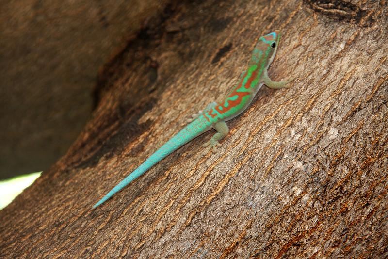 Madagascar, Fauna & Flora 16 Oda.jpg