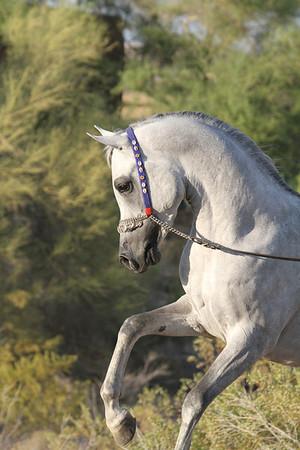 SE Stallion PROOFS