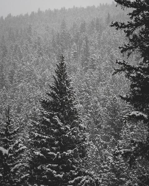Mt Evans Wilderness Winter-1.jpg