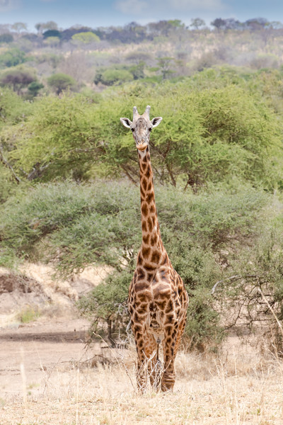 Africa - 102116 - 8269.jpg