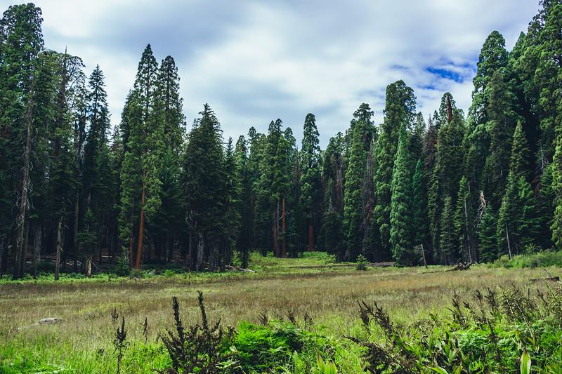 Rui in Sequoia-07138.jpg