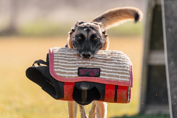 Sporty Dogs