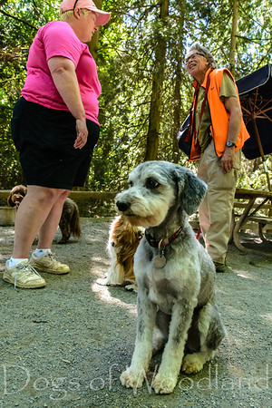 Dogs of Woodland 10 May 2016