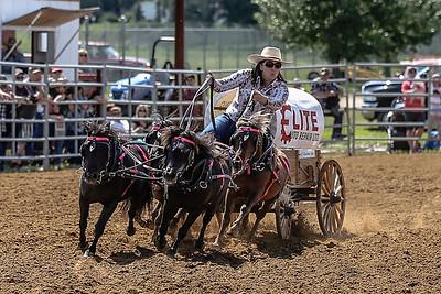 Mini chucks, some heavy horses and dogs!