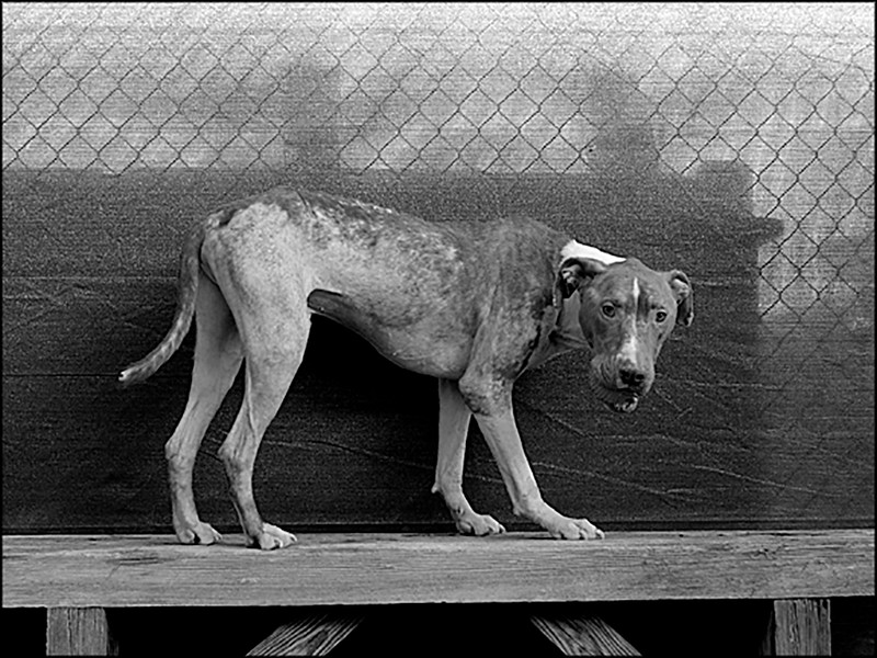 Rescue Dog Operation