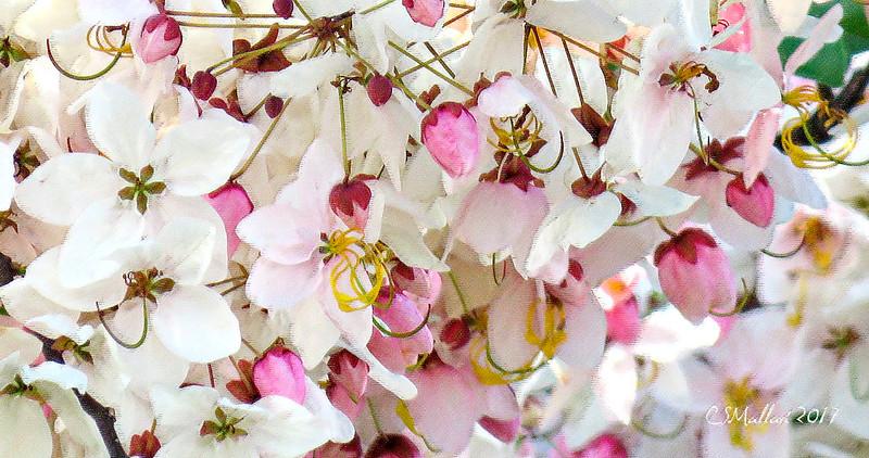 Ayala Alabang Flowers & Trees