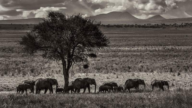 Tanzania-safari-3.jpg
