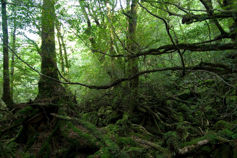 Shot of trees and branches in Yakushima, Japan