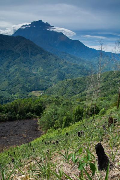 Kinabatangan River-3491.jpg