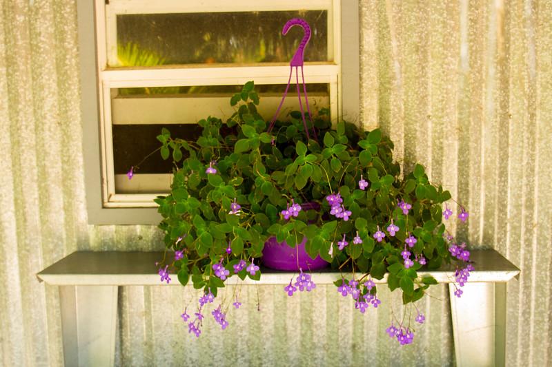 naples_botanical_garden_0008-LR.jpg