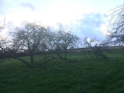 West Coket Cider Orchard
