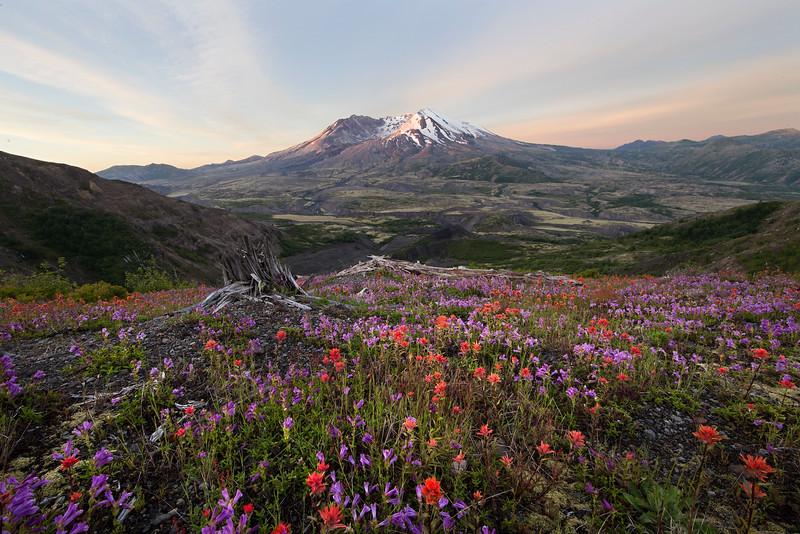 Wild Flower Heaven