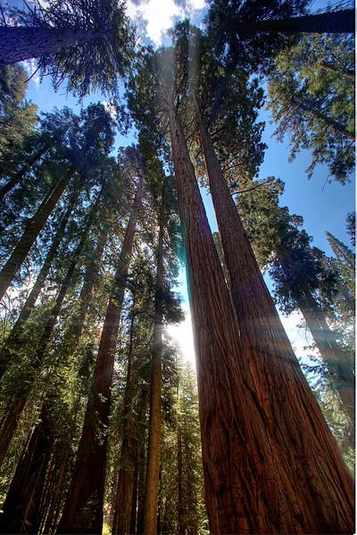 Sequoia -21.jpg