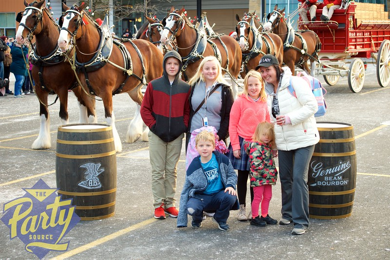 Clydesdale Portraits 128.jpg