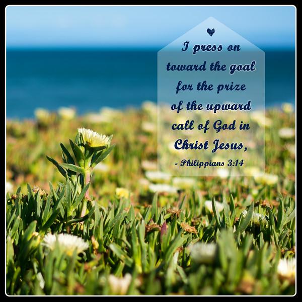 50_Philippians3-14_NJ_2014-5-10.jpg