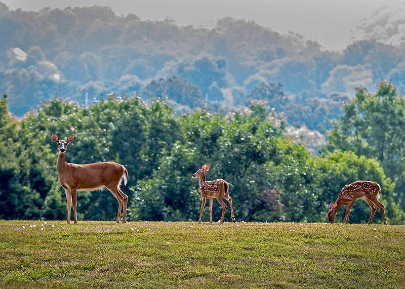 DeerFamily05.jpg