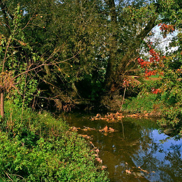 Autumn Hike 120 Film-00033.jpg