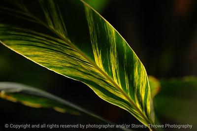 015-leaf-dsm-14jan09-1210