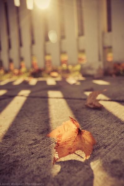 Autumn in Port Gamble
